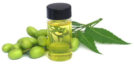 Medicinal neem extract with fruits and leaves
