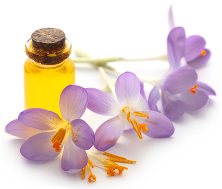 Saffron crocus flower with extract in a bottle over white