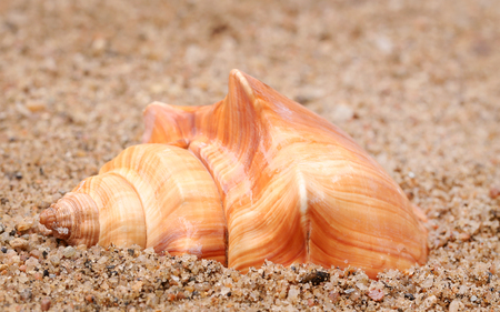 Close up of snail in a sea beach