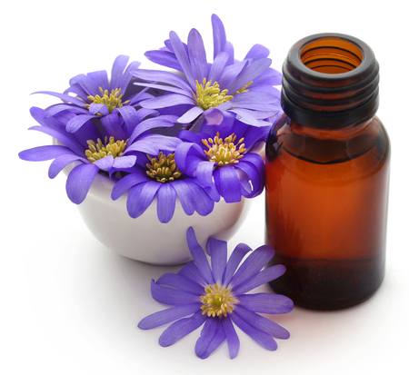 Anemone Blanda Blue Shades or Grecian Windflowers with essential oil in a bottle