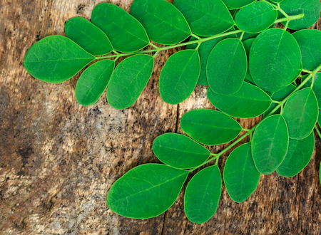 Edible moringa  leaves in timber surface