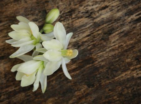 Edible medicinal moringa flower in timber surface