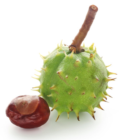 Horse chestnut with green fruit over white background