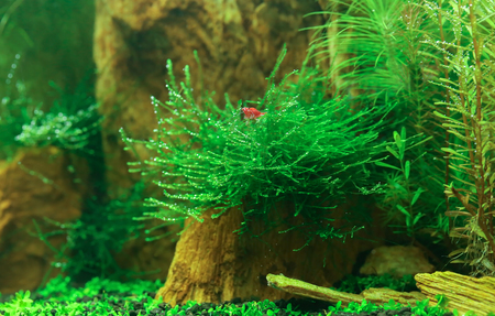 Underwater landscape of a planted aquarium
