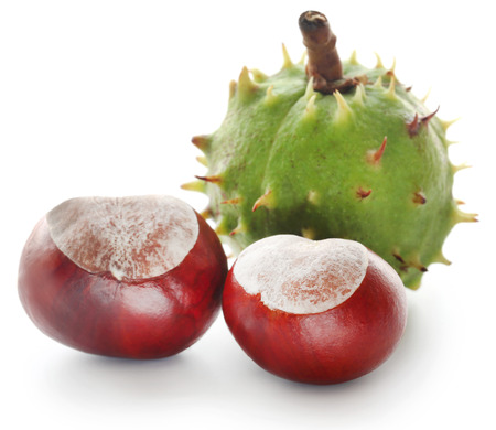 Horse chestnuts over white background