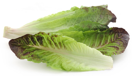 Fresh Romaine lettuce over white background Zdjęcie Seryjne - 121179618