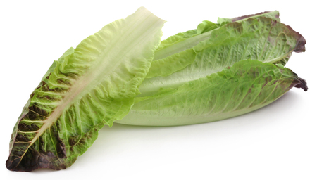 Fresh Romaine lettuce over white background