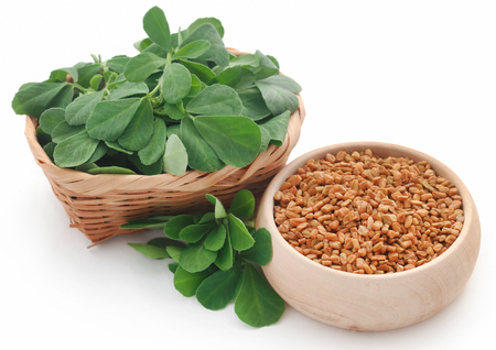 Fenugreek seeds with green leaves over white 写真素材
