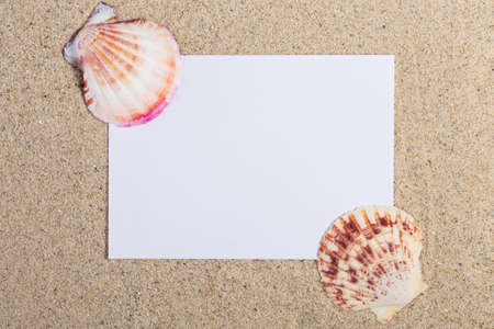 sea shells on beach: sea shells beach concept.reminder with seashells in the sand