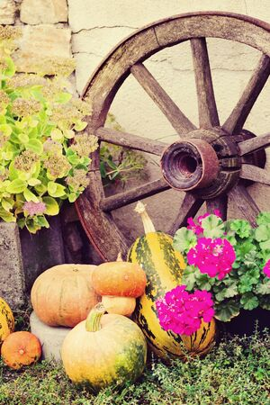 Autumn still life with pumpkins in rustic style  Stock Photo