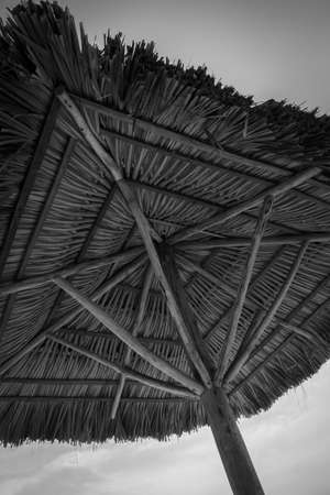 thatch: PALM THATCH UMBRELLA