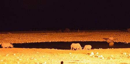 Rhinos at the floodlit waterhole
