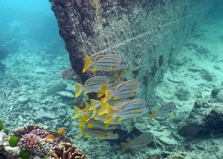 Shipwreck with fish Archivio Fotografico - 104201842