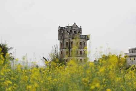 curare teneramente: Canola flowers and towers