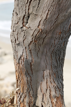나무 껍질 스톡 콘텐츠