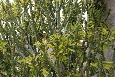 thorn tip: cacti