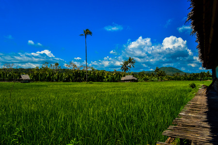 The beautiful green fields of Bohol, Philippines Stock Photo