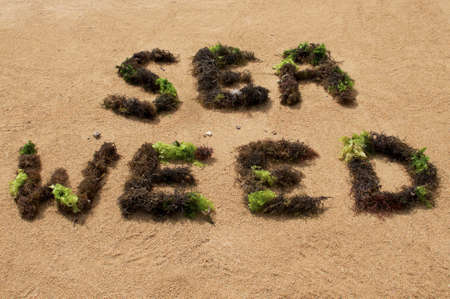 SEAWEED Text made with brown and green seaweed on a beach in Sanur, Indonesia