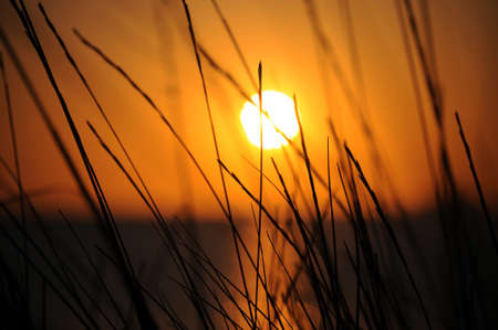 Wonderful close up of a blurred sunset captured on Cala Comte in Ibiza, with some grass on the focus in the foreground