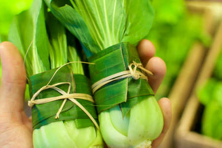 Pak Choi or Bok Choy wrapped in Banana leaf and held in female hands. This is an excellent solution how replace plastic packaging and reduce the waist of it - Bali, Indonesia