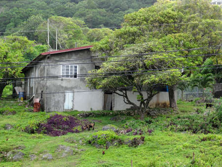 Fairy Hill, Portland, Jamaica - 15th June 2017 : View of a typical house surround by the green nature in the Portland area in Jamaica