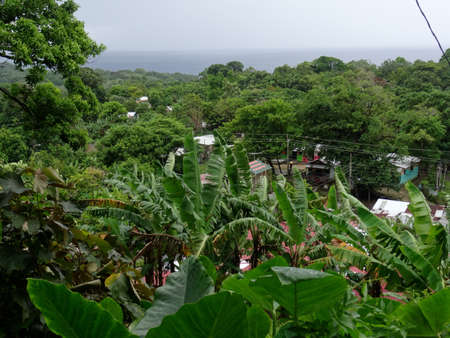 Typical view of a the Jamaican lush green nature with some houses in the background Stock Photo