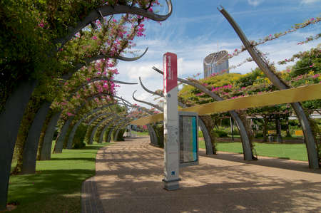View of the Grand Arbour structure covered by blooming Bouganvillea flowers in South Bank parklands in Brisbane. The structure functions as a pedestrian walkway and is 1km long