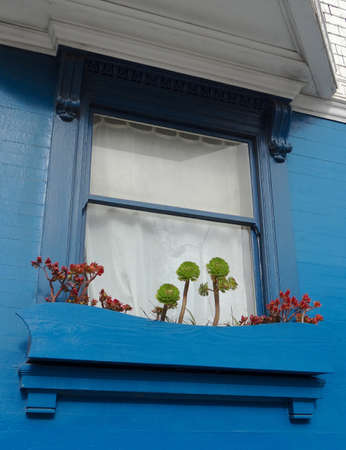 Beautiful San Francisco detail of a blue house facade with some succulent plants in front of the window 版權商用圖片