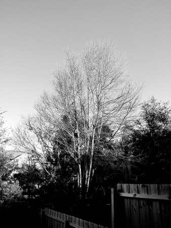 Winter Stok Fotoğraf