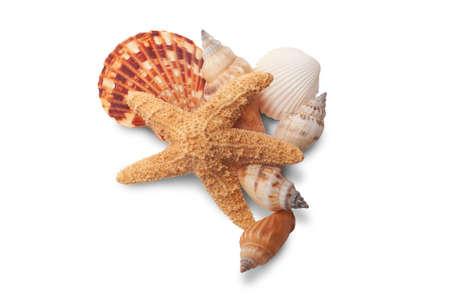 Sea Shells with starfish - path Stock Photo