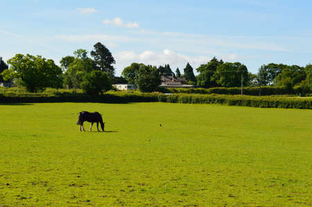 Large open green field with a horse eating grass.