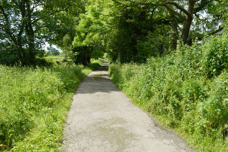 Narrow single track country lane surrounded by trees and fields.