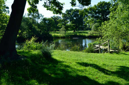 Country pond surrounded by trees and green grass. Imagens