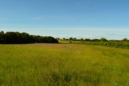 Country field in Wales with long grass.