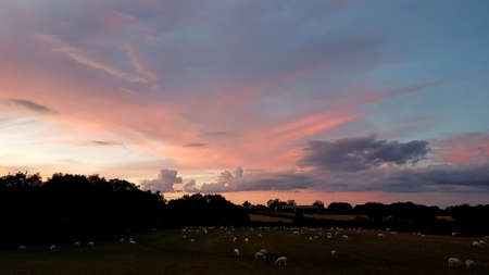 Rural sunset scene with sheep in a field. Imagens