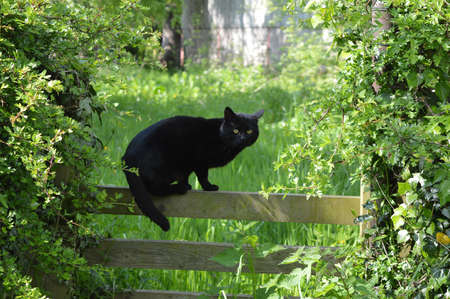 A black cat on a fence.