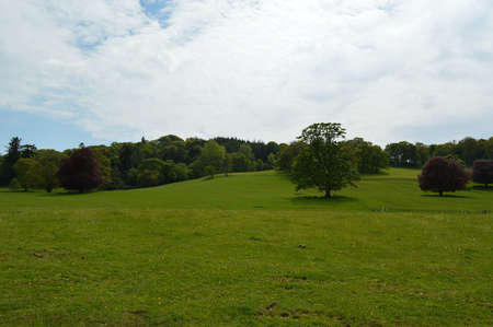 Welsh countryside and trees landscape. Banque d'images