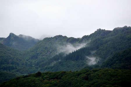 A misty forest landscape. Banque d'images