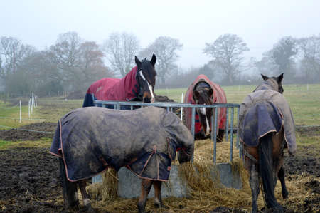 Horses in horse blankets eating hay from a round hay bale feeder on a misty and cold winter's day.