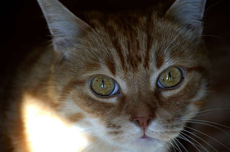 Close-up of a ginger cat's face.