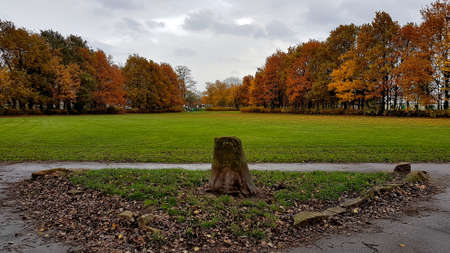 Autumn trees in a park either side of green grass.