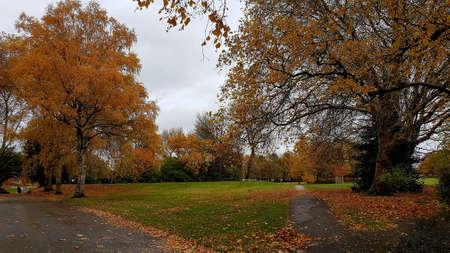 Autumn trees on a grassy urban park.