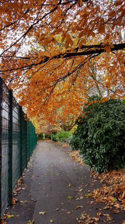 Canopy of Autumn trees over a path next to a tennis court.