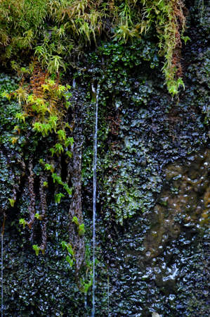 Close-up of a freshwater spring through a mossy rock face.