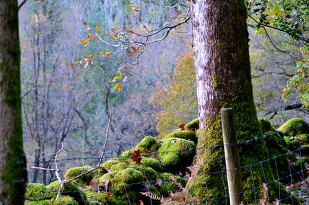 Damp Autumn day with moss covering the ground and base of the tree trunk.