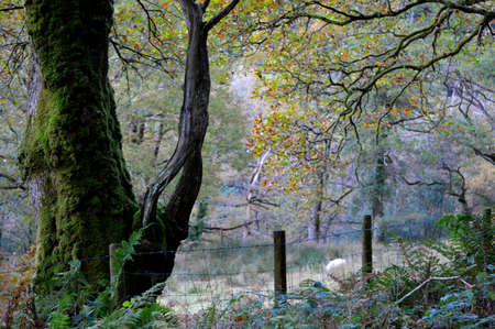 Woodland tree with green moss covering the trunk in a countryside forest. Banque d'images