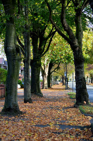 Manchester, England, United Kingdom - 10/22/2018: Autumn trees lining an urban UK street and autumnal leaves covering the ground.