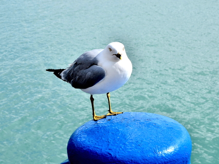 sea gull perched on pylon