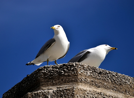 밖으로 바다 갈매기 커플 스톡 콘텐츠