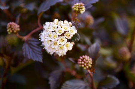 spring growth Фото со стока - 109367104